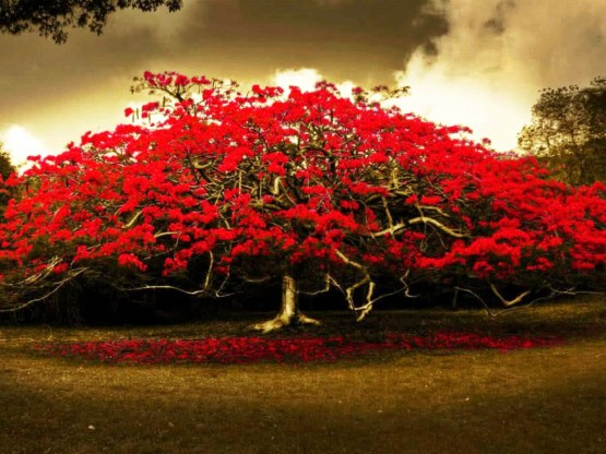 Red-Flowers-Tree