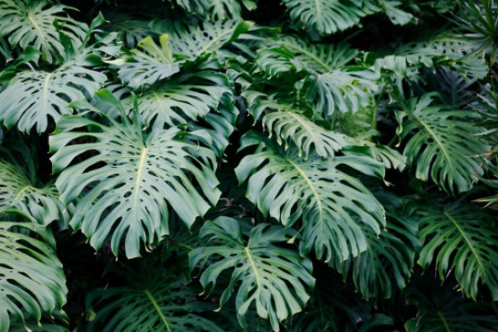 Tropical Shrubs - Delicicosa 1