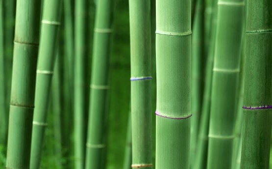 Catagory Bamboo - bamboo_hd_wallpaper_1