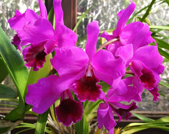 orchids-indoors plants